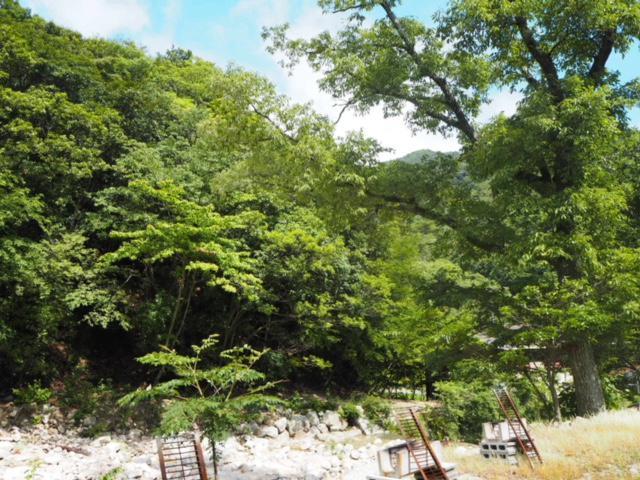 森のレシピ.jpg