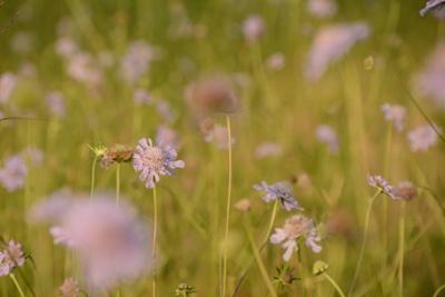 http://www.muji.net/camp/minaminorikura/blog/DSC_7417.JPG