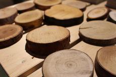 ワークショップのお誘い~【岐阜高島屋】間伐材からつくる木のコースターづくり