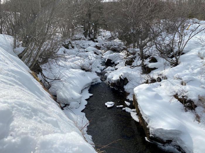 20210212 雪の中blog.jpg