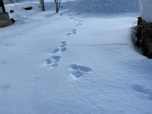 10雪解けに喜ぶウサギ.jpg