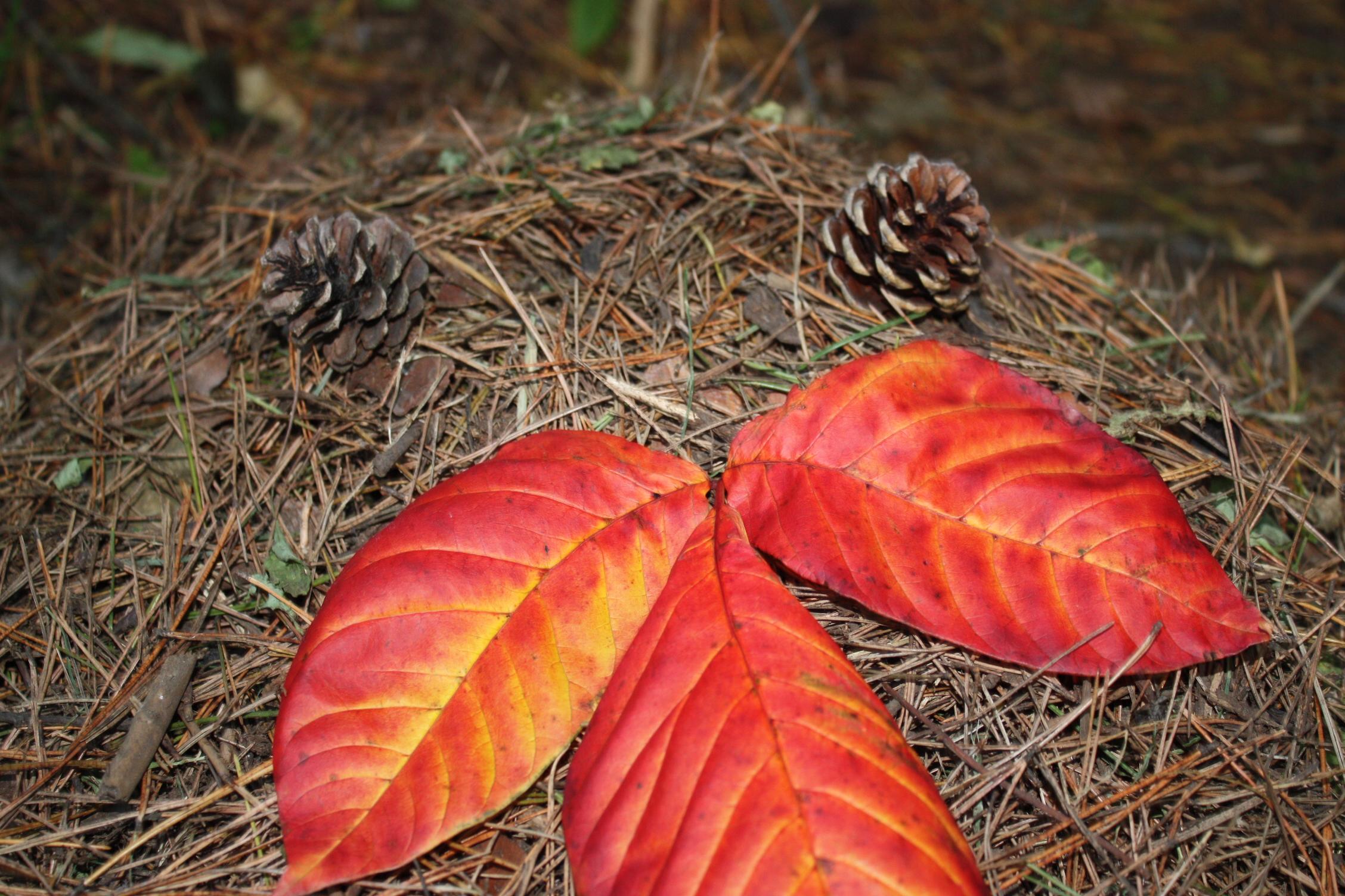 http://www.muji.net/camp/tsumagoi/blog/IMG_9130.JPG