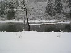 いよいよ津南キャンプ場にも雪が降りました。