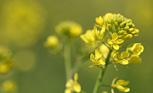 旬を味わう ―野菜の花―