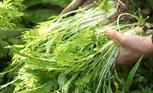 地方野菜と伝統野菜