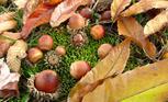 木の実を探る