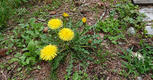 野に咲く草花