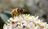 ミツバチからのメッセージ