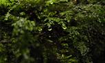 ミドリムシは地球を救うか?