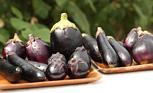 旬を味わう ―秋茄子―