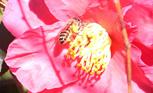 ミツバチから学ぶ自然