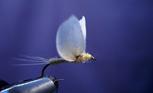 人与自然 ―水生昆虫、鱼及生活―