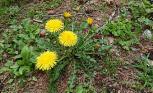 在田野中盛开的花草